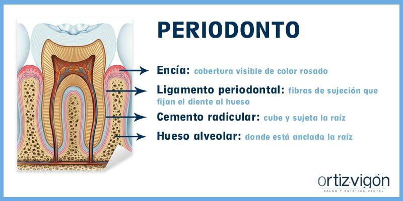 Periodonto: el abc de las enfermedades periodontales